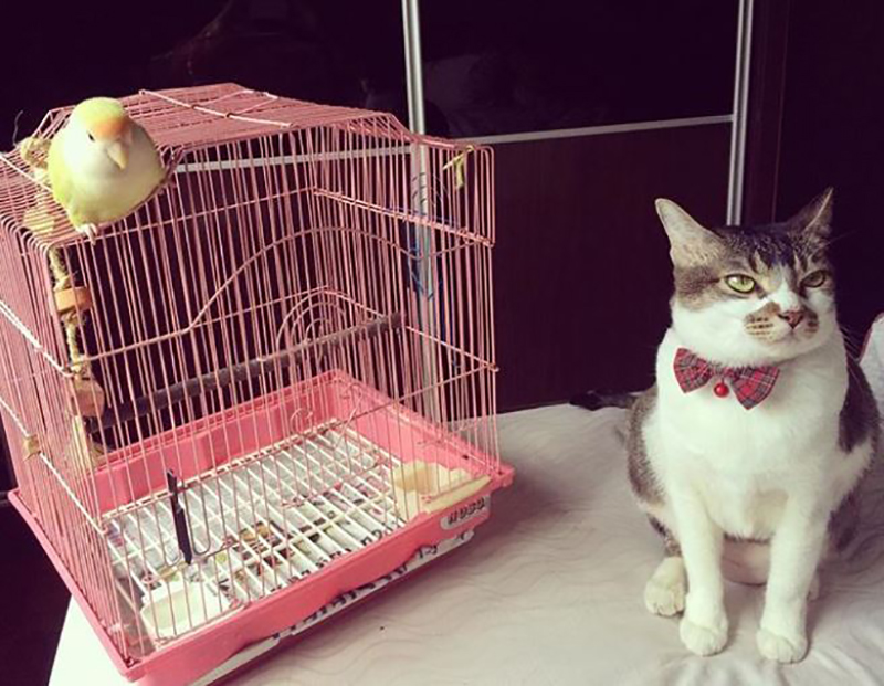 bird-meets-cat
