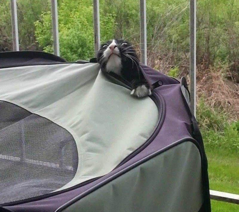 a cat escapes a tent