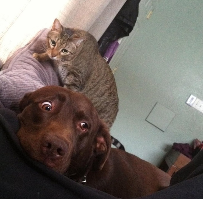 cat-trolling-dog