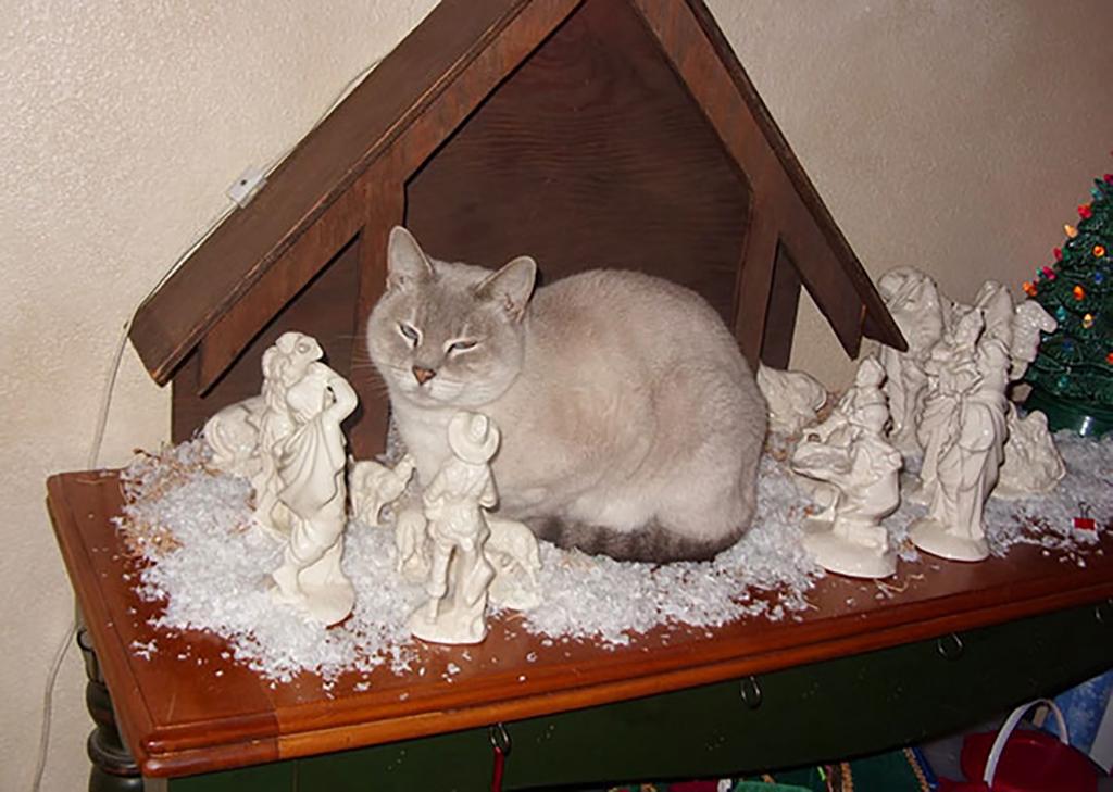White cat in white nativity scene