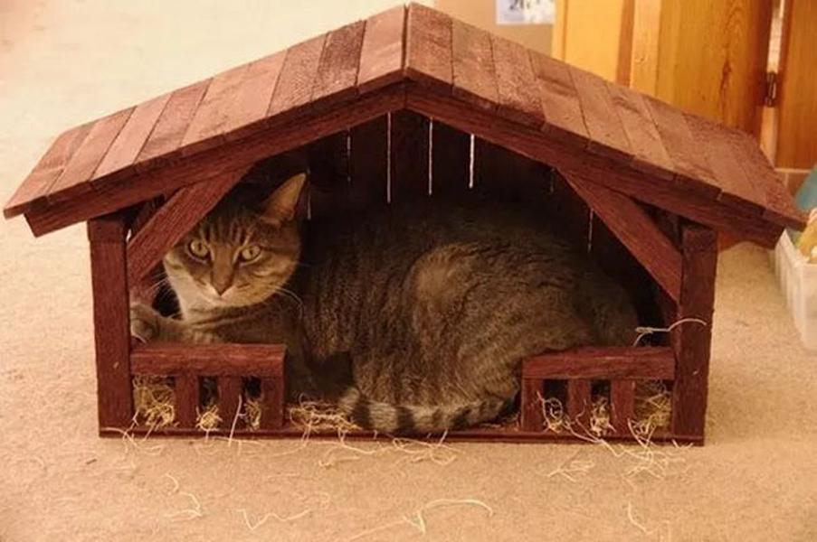Cat snuggled in manger