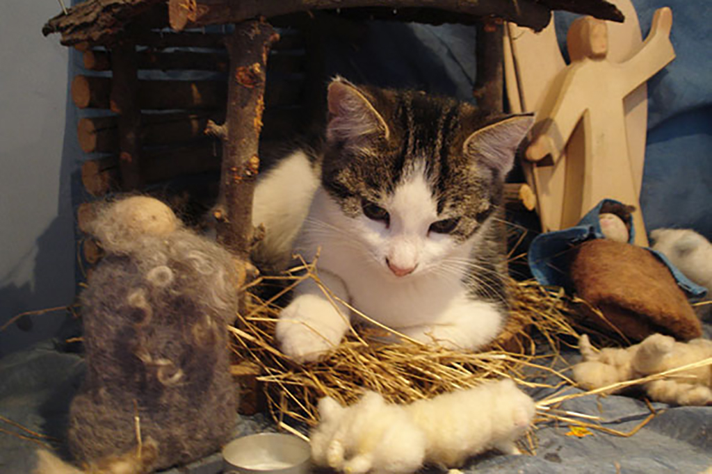 Cat playing with nativity scene