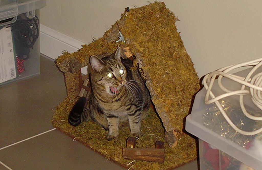 Scared cat in a nativity scene