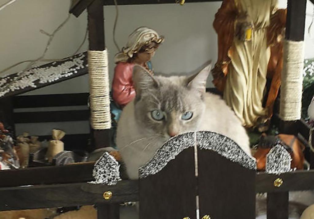 Cat behind nativity gate