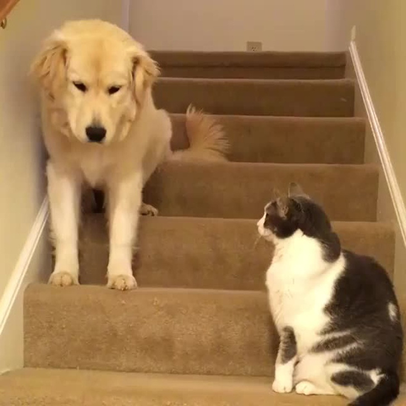 dog-cat-stair-dare