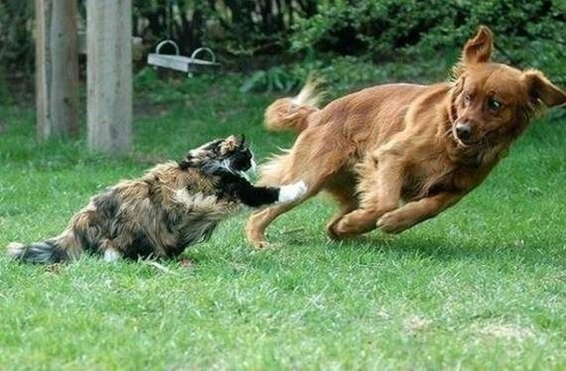 dog-running-cat