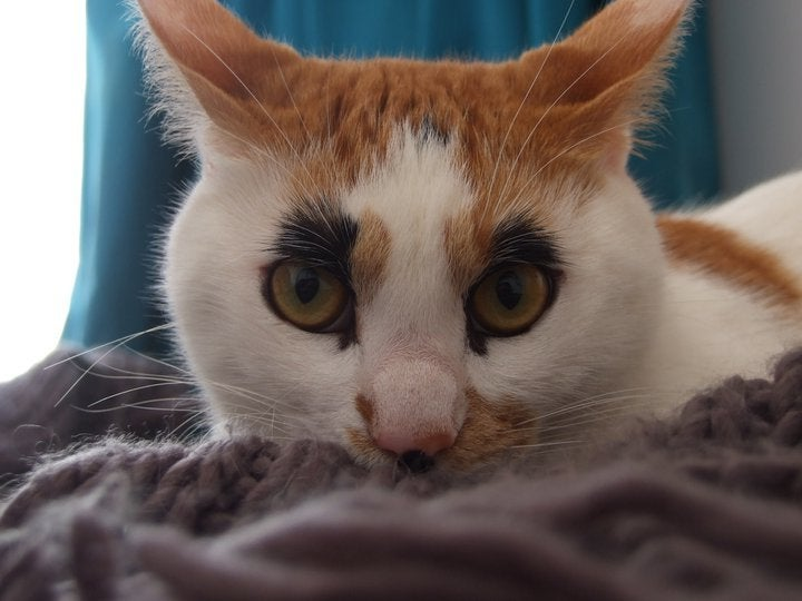 An orange and white cat has black fur around its eyes that looks like makeup.