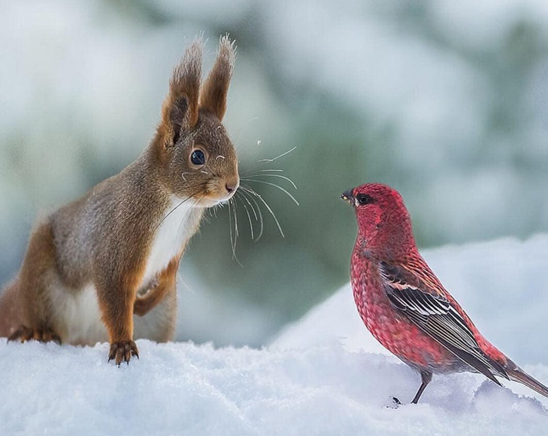 squirrel-meets-bird