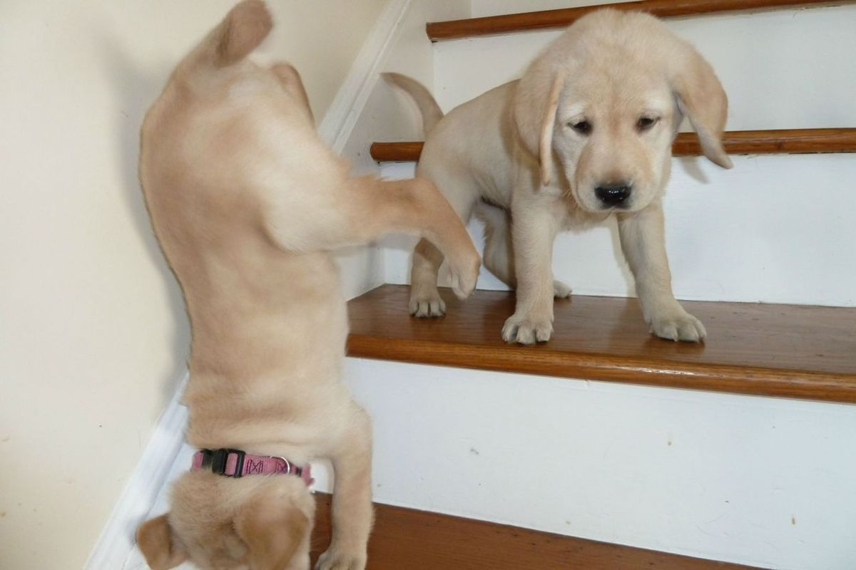 a dog falling down the stairs