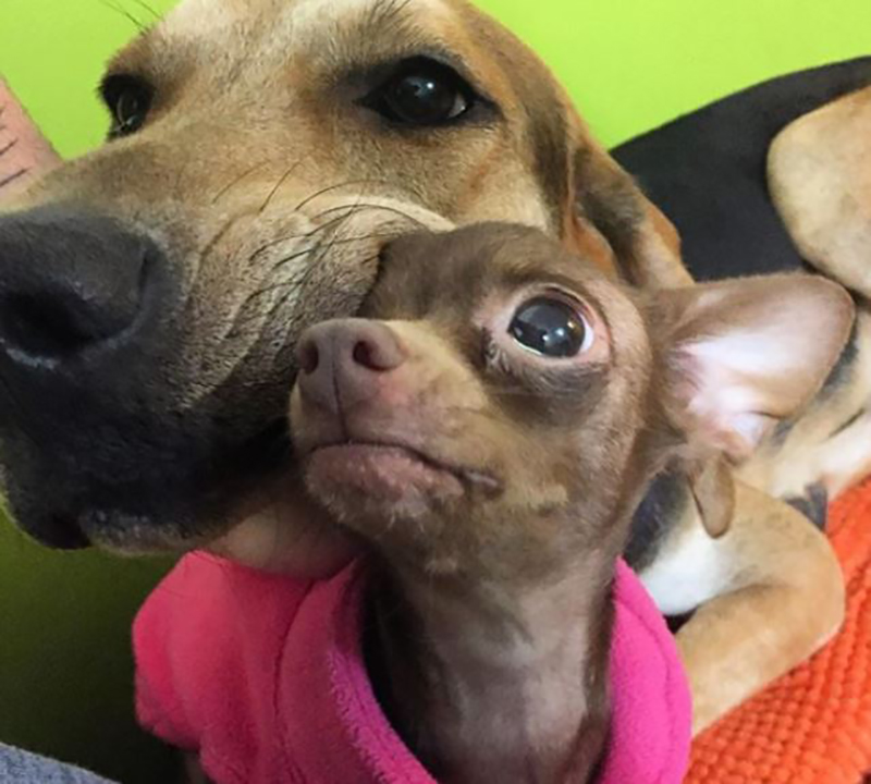 A large dog leans its face into the head of a smaller dog.