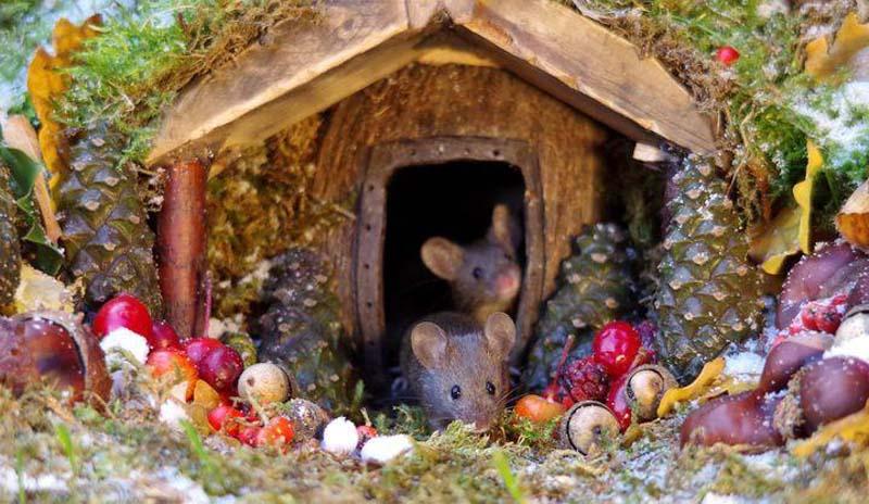 Creating A Beautiful Habitat