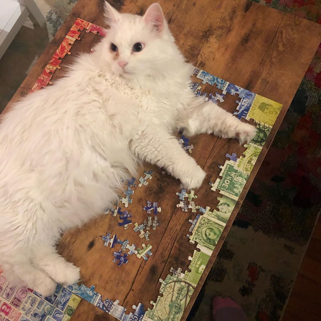 cat playing with puzzle