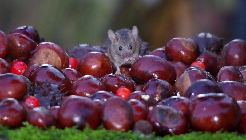 What The Mice Eat