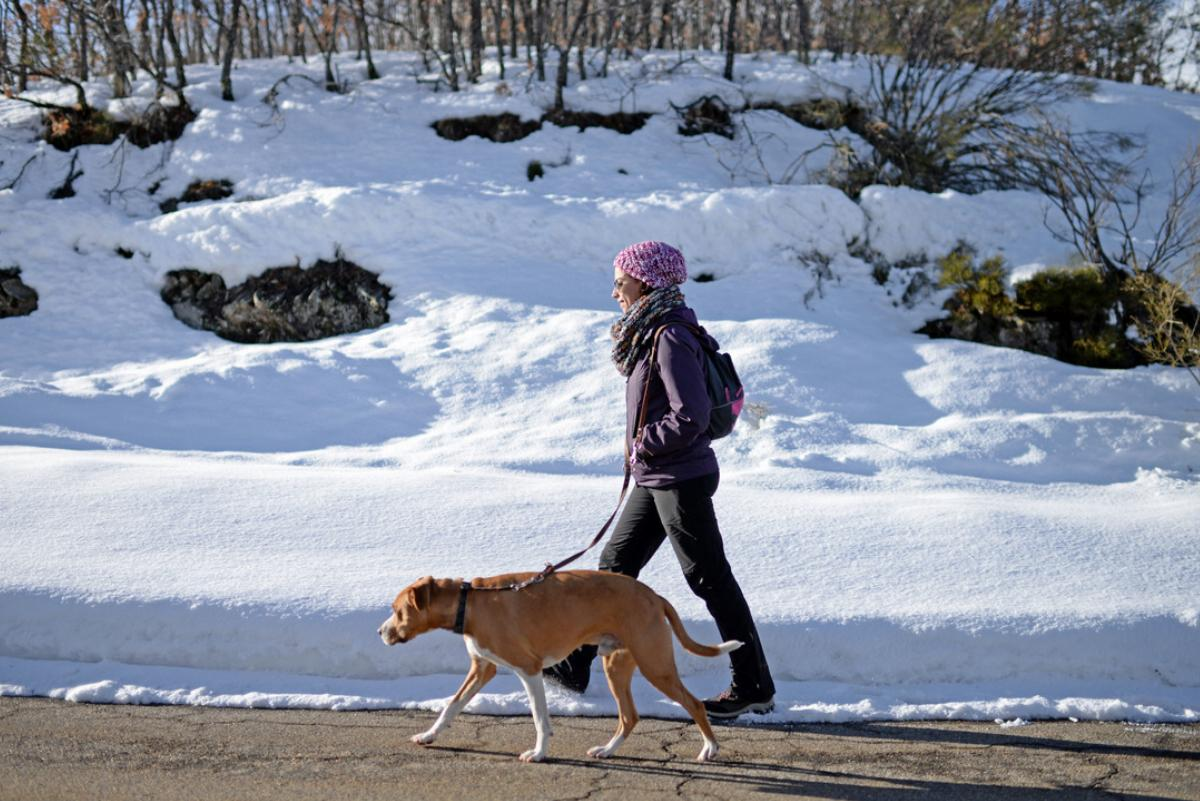 Young woman walks with her dog in winter environment.