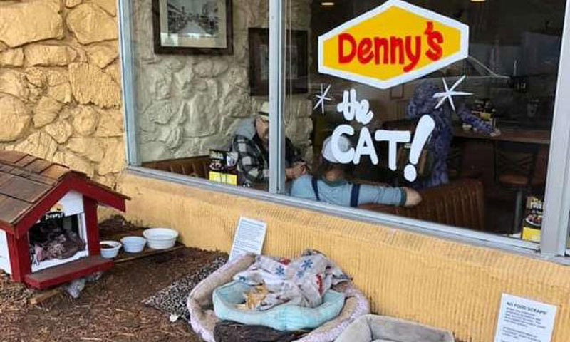 Denny's cat
