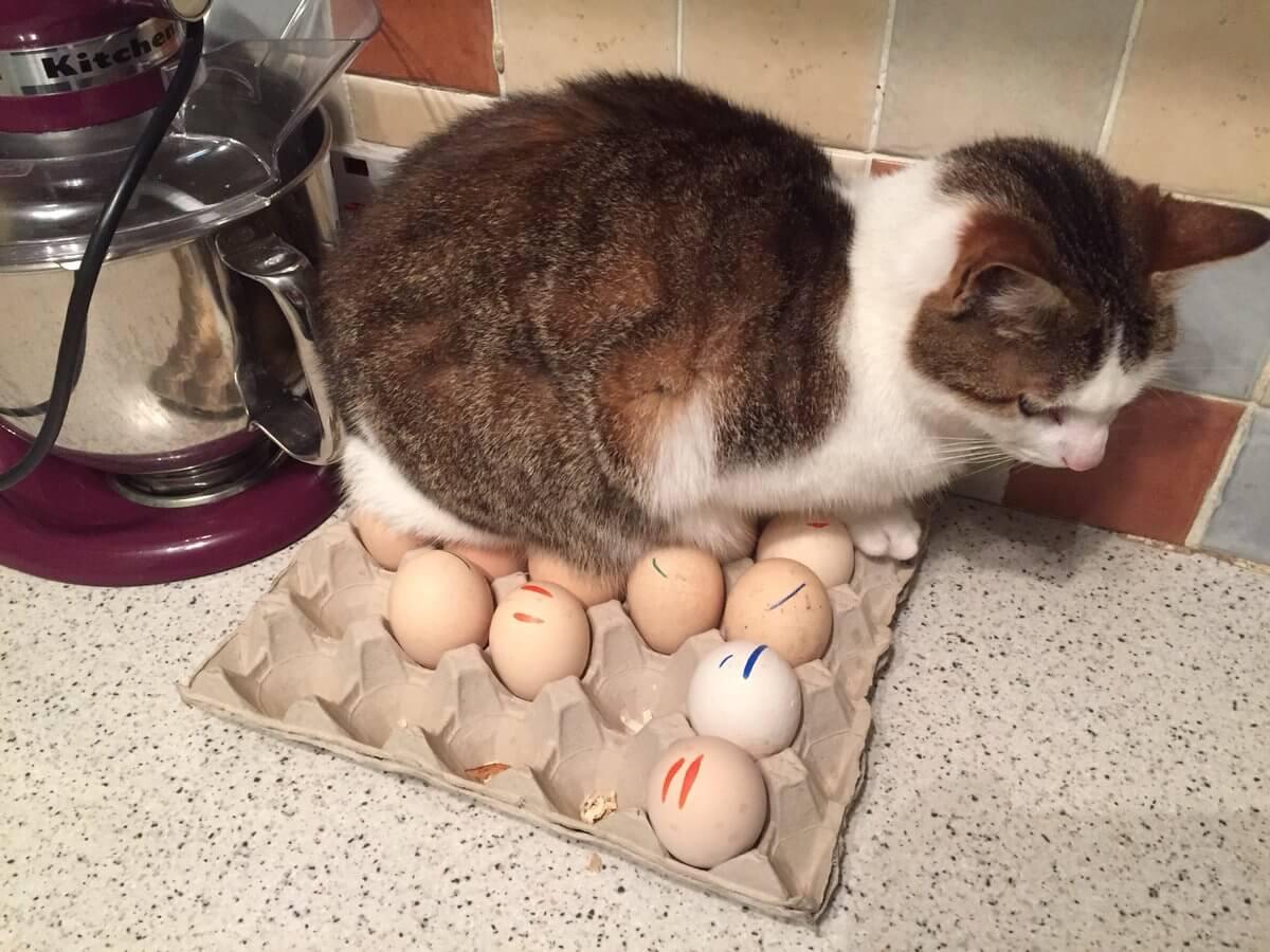 cat on eggs