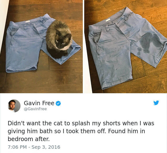 funny-cat-shorts-34949-96355