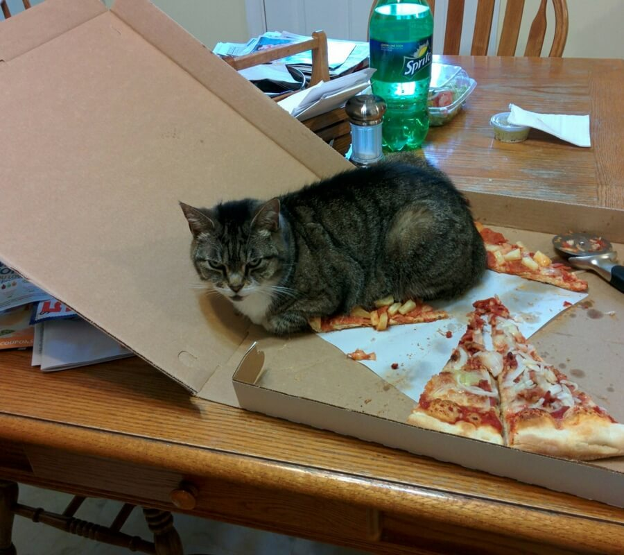 the cats pizza now