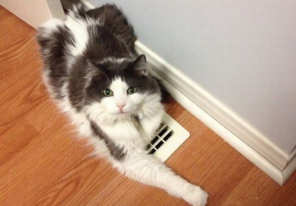 Cat laying on vent