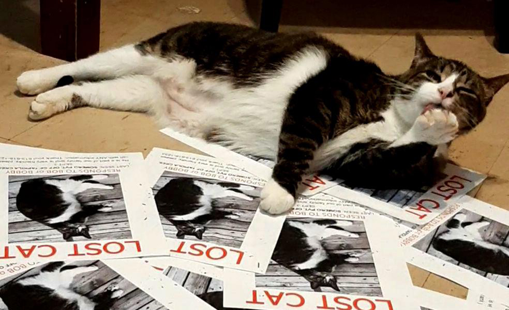 Cat lying on lost posters
