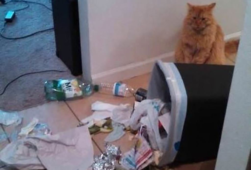 Cat and trash