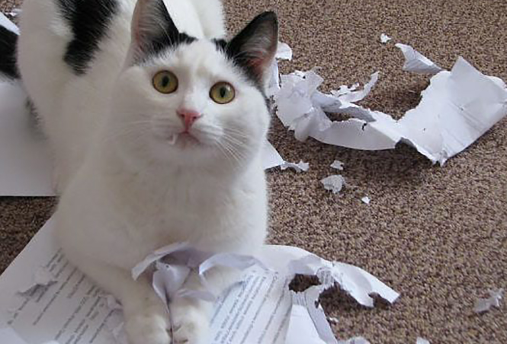 Cat tearing up documents