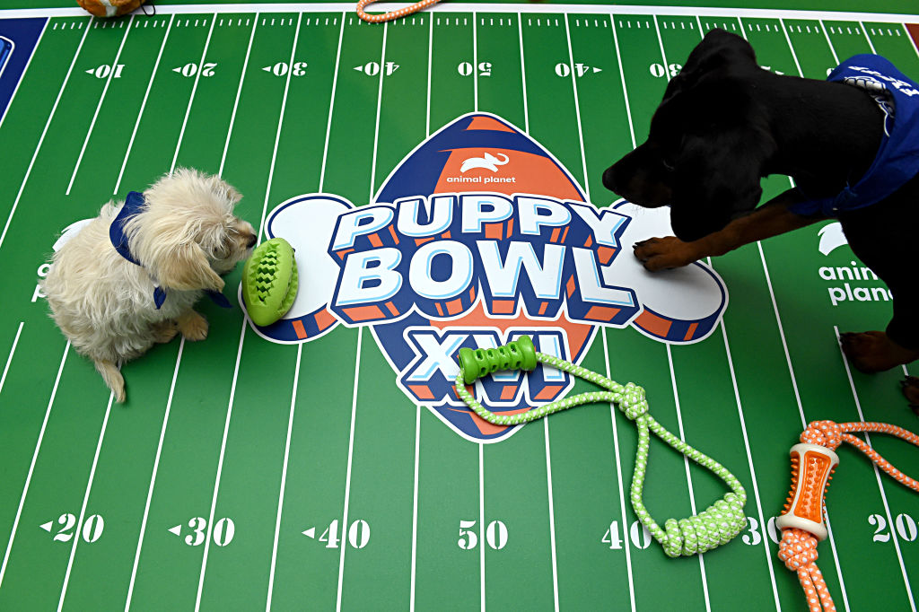 the midfield logo for the puppy bowl