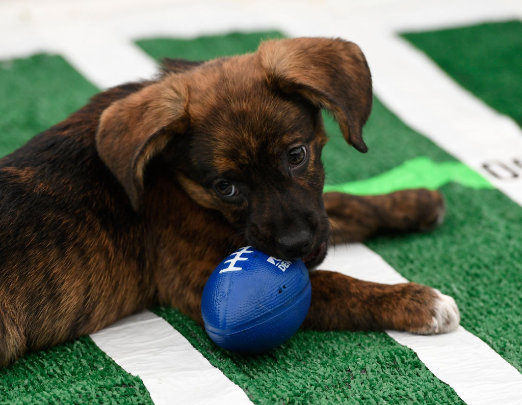 puppy bowl debuted in 2005