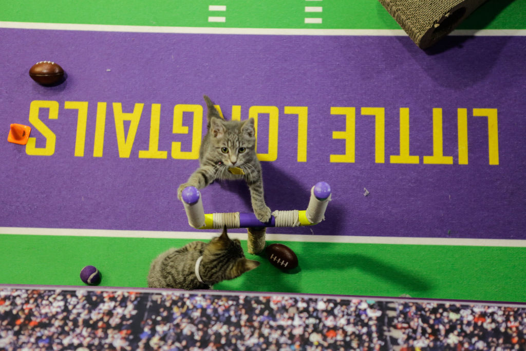 kitten bowl on hallmark channel