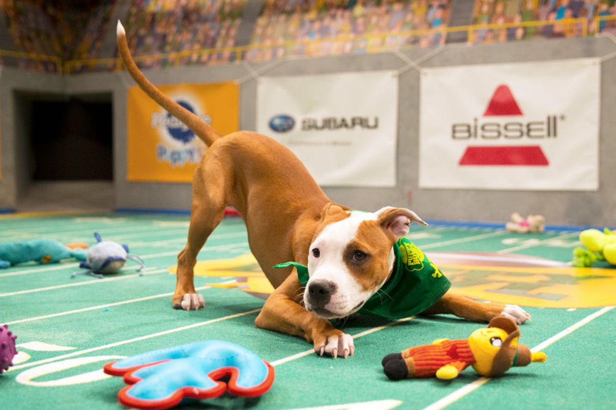 a puppy from the puppy bowl posing