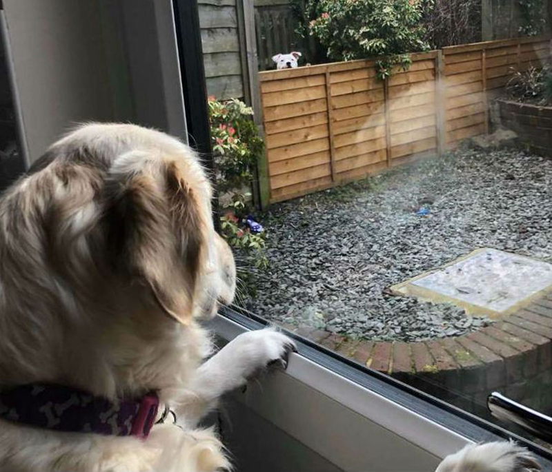Lola looks through the window at Loki who is peeking over the fence.