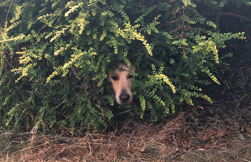 Lola hides in the bushes.