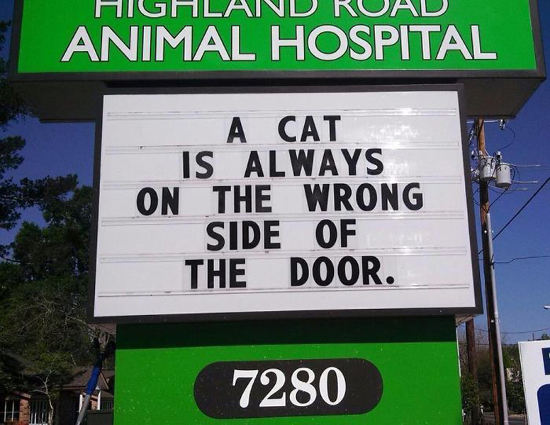 cat sign funny