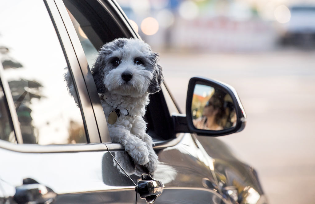 a dog with its head out of a car window