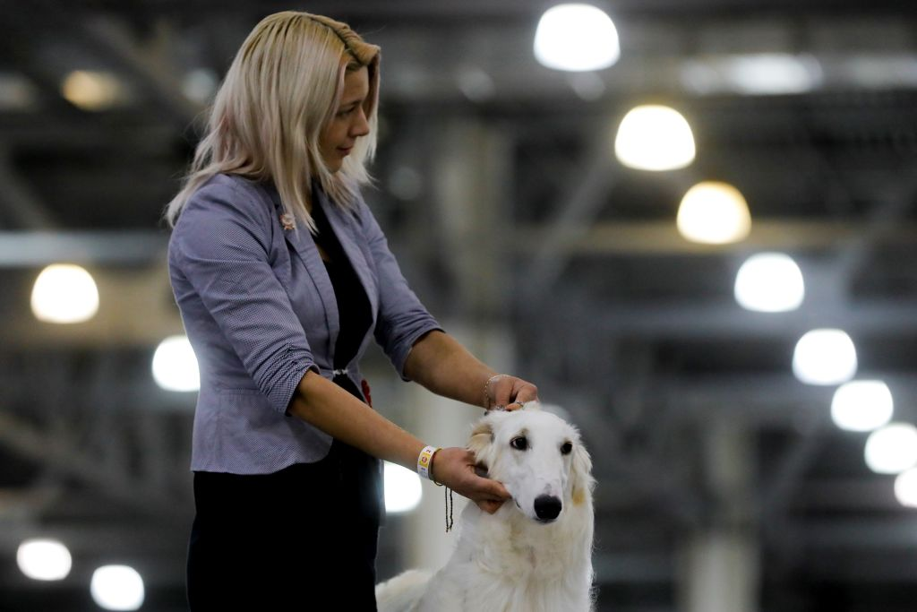 a dog with its handler