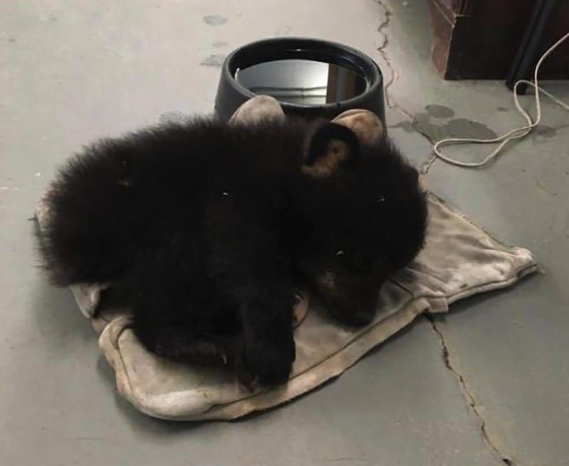 baby-bear-laying-inside
