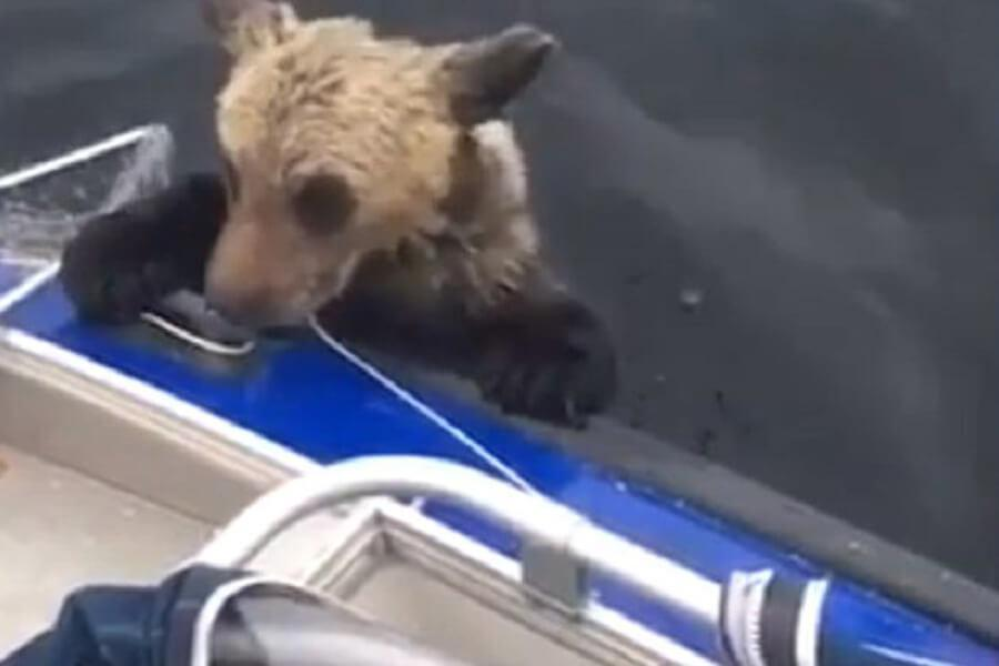 bear-trying-to-hold-on-40226-81439