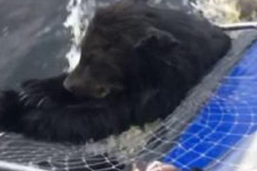bear-two-in-net-76406-16252