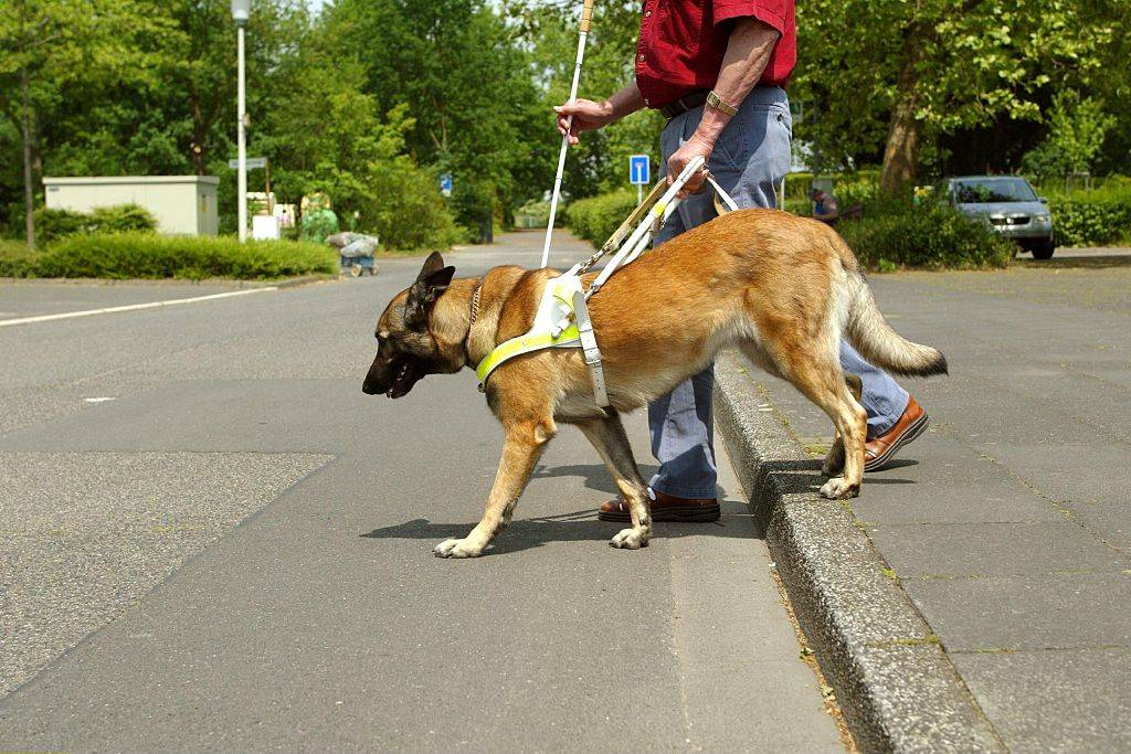 The First Seeing Eye Dog Came To America In 1928