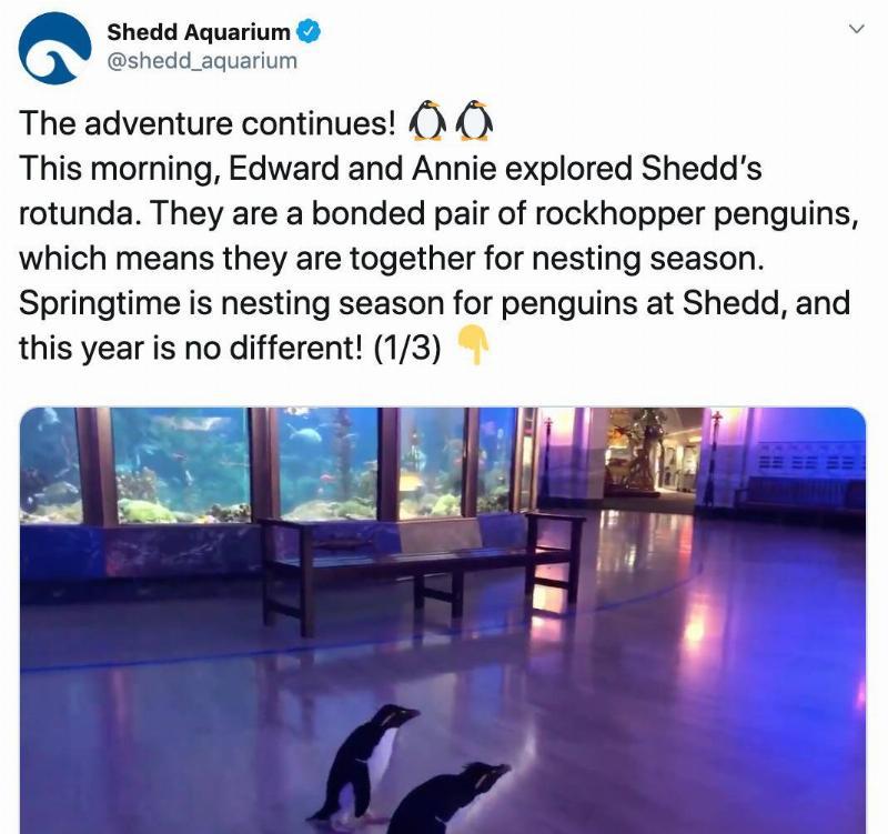 penguins walking around an exhibit