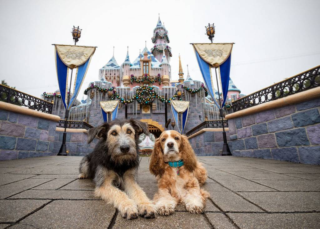 lady and the tramp dogs in front of the sleeping beauty castle at disneyland