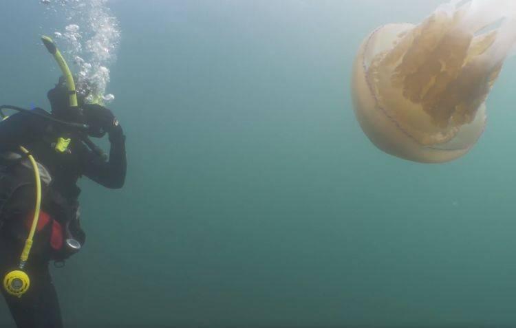 giant-jellyfish-6