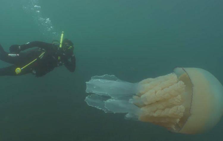 giant-jellyfish-7