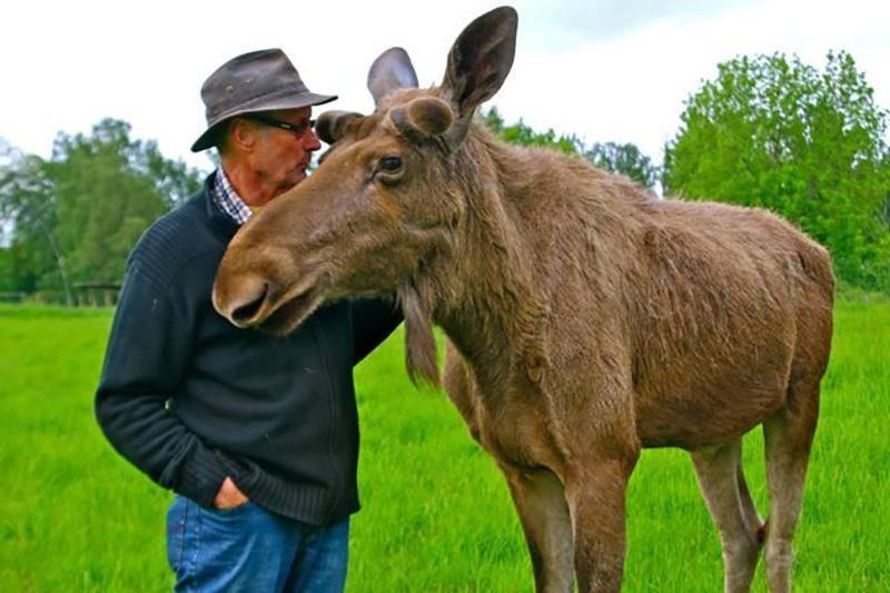 moose-whisperer-57226