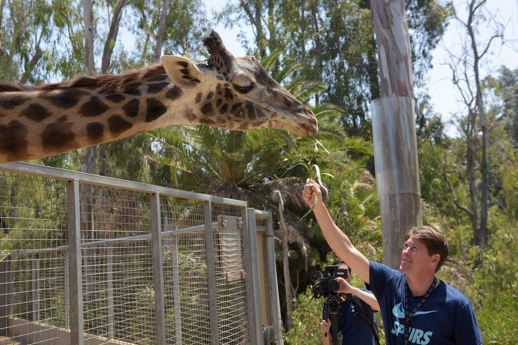 a man feeding a giraffe at the san diego zoo