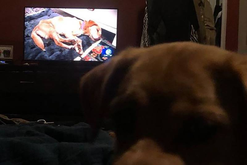 Suzy watches her own news story on the TV.