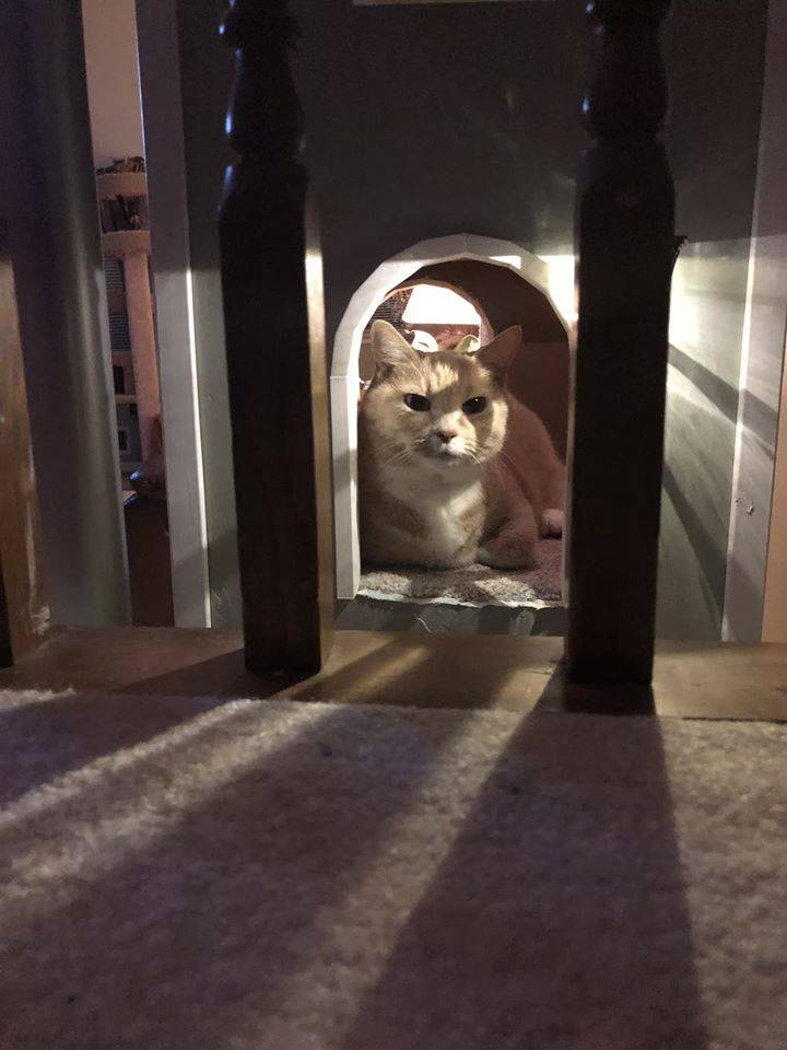 snarky cat in kitty tower looking at camera