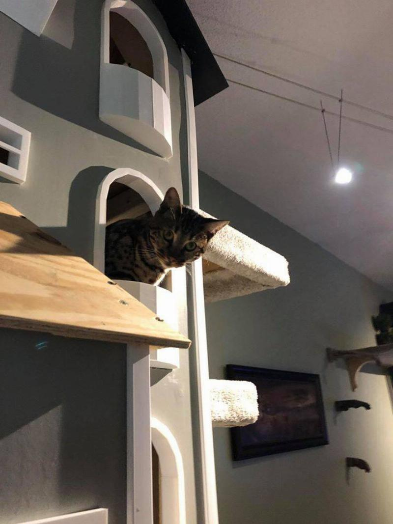 cat looking down out of his kitty tower balcony