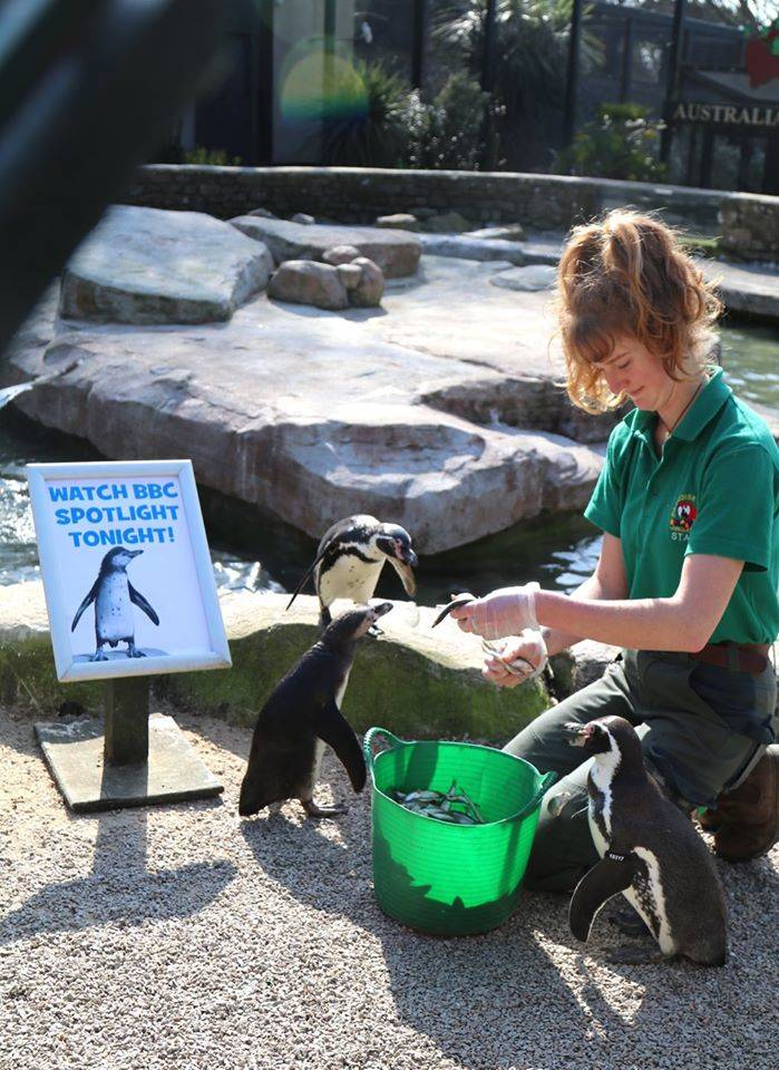 izzy the zookeeper feeding the penguins