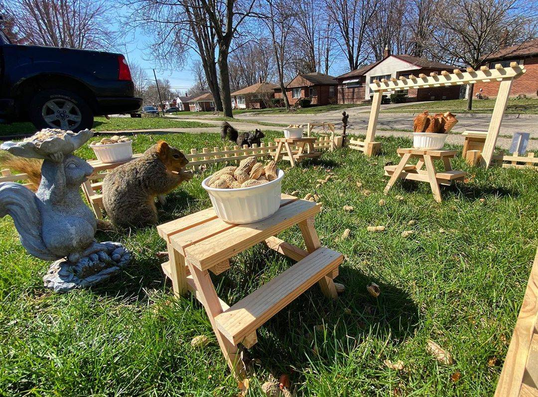 squirrels on the lawn at their tiny restaurant